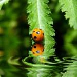 Ladybug on a leaf reflected on water — Stock Photo