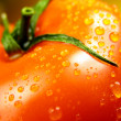 One tomato — Stock Photo #1080195