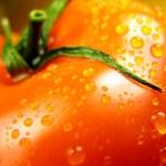 One tomato — Stock Photo
