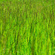 Grass seamless pattern. — Stock Photo