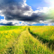 Green grassland and sky for background — Stock Photo