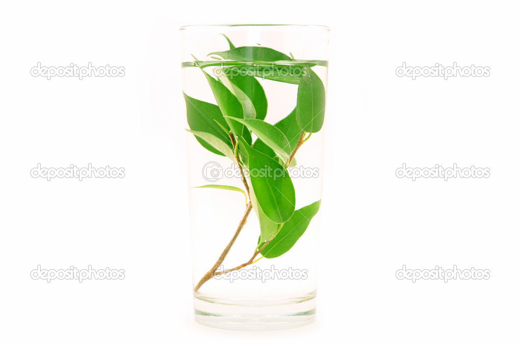 Test tubes with small plants — Stock Photo #1189637