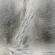 Royalty-Free Stock Photo: Fur texture