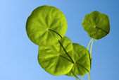 Four leaves in sky — Stock Photo