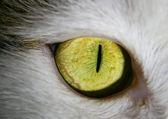 Högra ögat i en katt - makro — Stockfoto