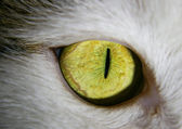The right eye of a cat - macro — Стоковое фото