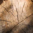 Cut wooden log — Foto Stock
