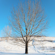 Winter landscape - Stock fotografie
