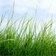 Grass on a background of the sky - Foto de Stock  