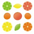 Royalty-Free Stock Vector Image: 9 citruses