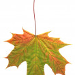 Leaf in autumn - Stock Photo