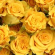 Yellow roses — Stock Photo #1011659