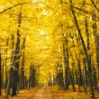 Stock Photo: Forest in autumn