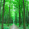 Trailway in forest — Stock Photo
