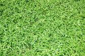 Grüner hintergrund — Stockfoto
