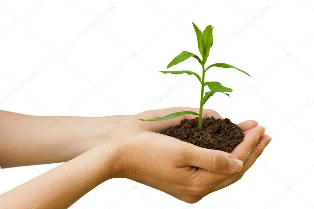 Agriculture. plant in a hand isolated on white background — Stock Photo #1029141