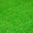 Royalty-Free Stock Photo: Grass on football stadium