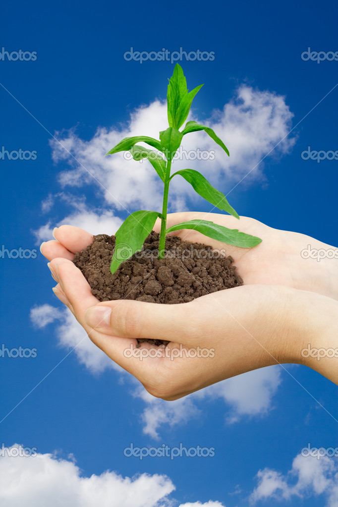 Agriculture concept. plant in a hands over blue sky — Stock Photo #1035887