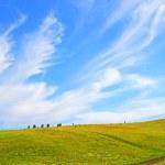 champ et ciel — Photo