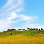 campo e céu — Foto Stock