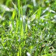 Grass — Stock Photo #1011396