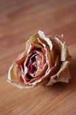 Herbarium. Rose — Stock Photo