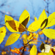 Foliage — Stock Photo #1036570