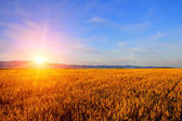 Sunrise in the field — Stockfoto