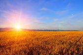 Wschód słońca w polu — Zdjęcie stockowe