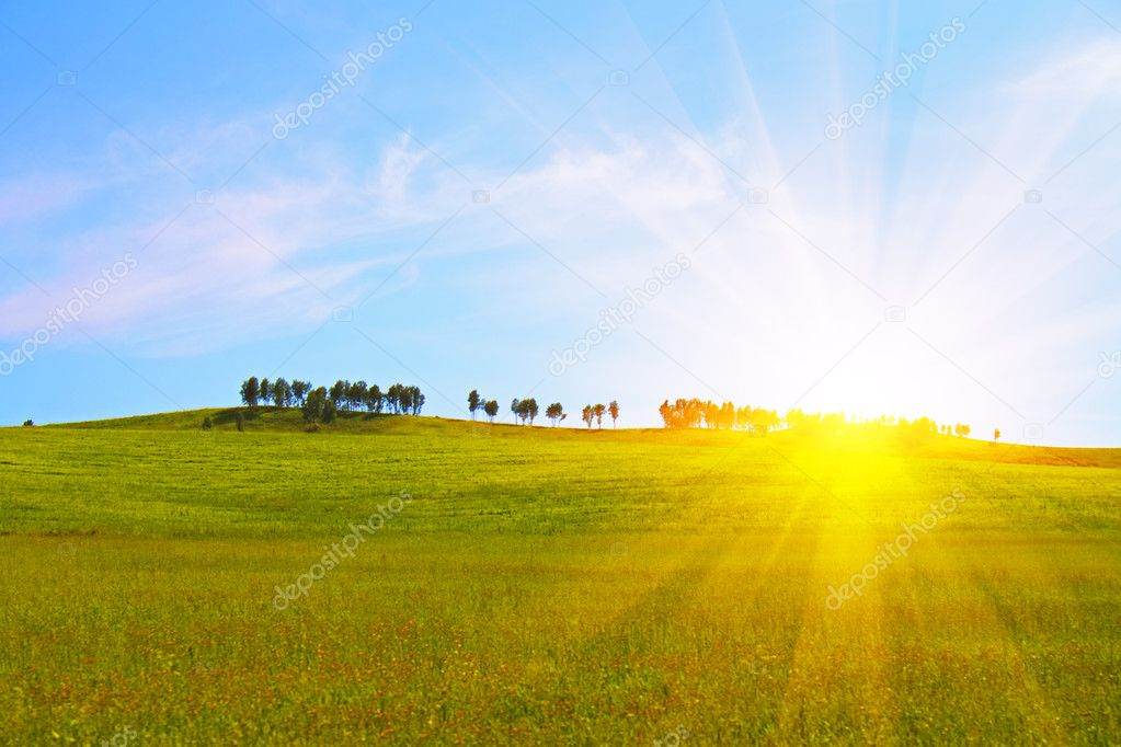 Green field and blue sky — Stock Photo #1639711