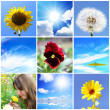 Several combined summer pictures — Stock Photo