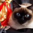 Siamese cat and a gift set — Stock Photo #2608594
