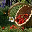 The basket with strawberries — Stock Photo