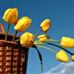 Basket with yellow tulips — Stock Photo #1038571