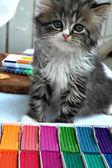Fluffy curious kitten — Stock Photo