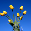 Some yellow tulips — Stock Photo #1069557