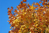 Autumn`s tree — Stock Photo