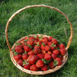 Strawberry Basket — Stock Photo