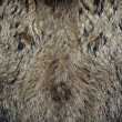 Skin of a wild boar — Stock Photo