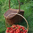 Baskets filled with strawberries — Stock Photo
