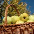 Royalty-Free Stock Photo: Green apples in a basket