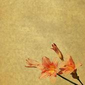Blumen hintergrund mit daylilys — Stockfoto
