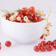 Currant — Stock Photo #1226102