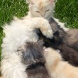 Mother cat and kittens — Stock Photo #1006339