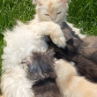Royalty-Free Stock Photo: Mother cat and kittens