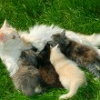 Foto Stock: Family of cats