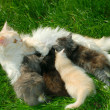 Family of cats - Stock Photo
