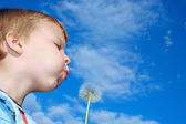 Dandelion wishing — Stock Photo