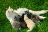 Family of cats — Stock Photo