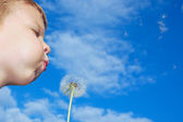 Dandelion wishing blowing seeds — Stock Photo